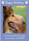 "Rough Collie-Happy Birthday - ""From The Dog"" Theme"